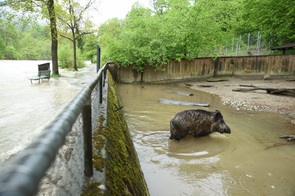 floods switzerland, flooding switzerland may 2015, flooding bern may 2015, floods switzerland bern may 2015, flooding bern switzerland may 2015, Parts of the zoo along the Aare are underwater.