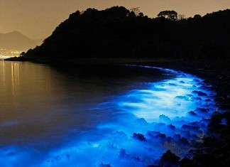 fluorescence ocean, fluorescence algae picture, plankton may 2015, fluorescence may 2015, ocean fluorescence may 2015, pictures fluorescence may 2015, fluorescence china may 2015, fluorescence algae china may 2015