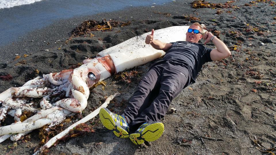 giant squid kaikoura, giant squid kaikoura new zealand, giant squid kaikoura 2015, giant squid kaikoura nz 2015, giant squid kaikoura photo, giant squid kaikoura video, Giant Squid Found on New Zealand Beach, The massive beak of the Giant Squid