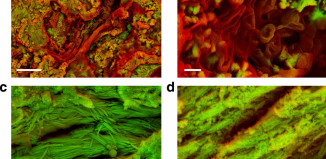 blood and collagen dinosaur, 75-million-year-old dinosaur blood and collagen discovered in fossil fragments, jurassic park, jurassic park almost reality,