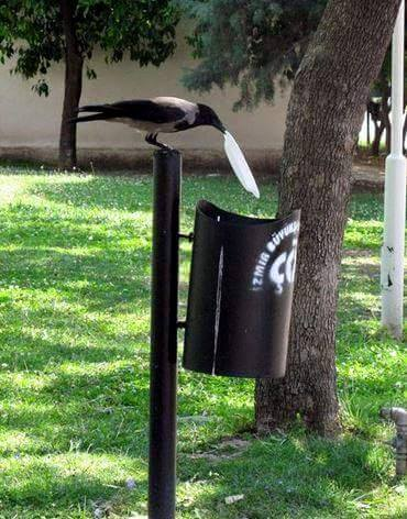 crow garbage, crow cleans garbage, crow throws garbage, crow garbage picture, crow clean its table, crow garbage story