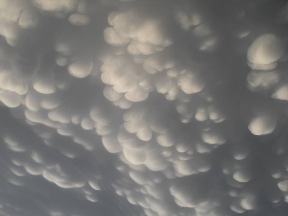 mammatus chicago june 2015, mammatus chicago june 2015 picture, mammatus chicago june 2015 video, mammatus chicago june 2015 motion picture, mammatus chicago june 2015 film, Awesome mammtus clouds in the sky of Illinois on June 10 2015. Photo: Lauren Seeley, A close-up of the mammatus clouds near Chicago. Perfectly formed! Photo: Lauren Seeley
