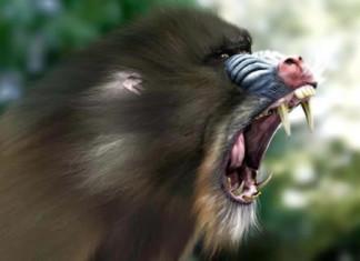 animal scream, strange animal scream, strange sounds from forest, strange sound from animal in forest