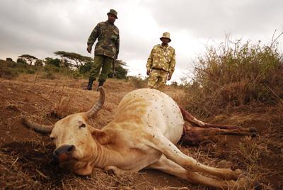 anthrax buffalo kenya, anthrax kills buffalo in kenya, anthrax buffalo nairobi kenya, anthrax outbreak kenya, anthrax outbreak nairobi kenya