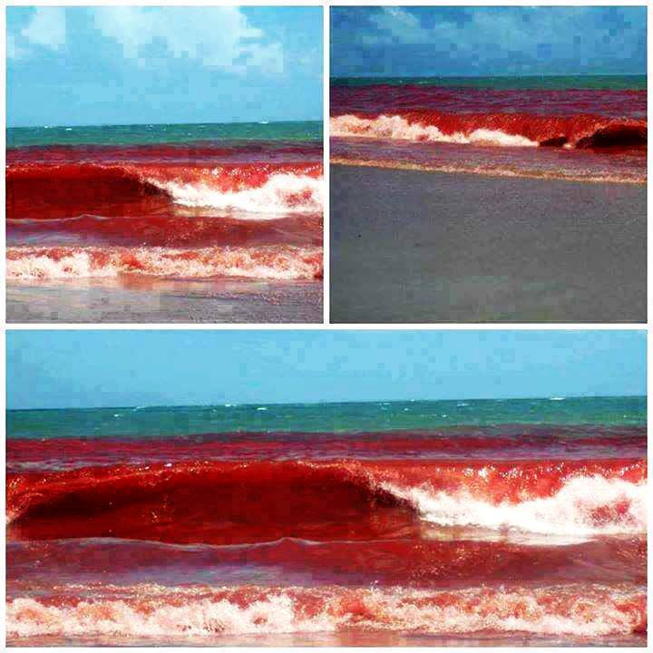 blood red water brazil, red tide photo, amazing red tide brazil 2015, brazil red tide 2015 baffles residents, red tide pictures brazil may 2015