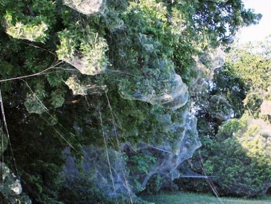 dallas spider web, rowlett spider web photo, giant spider web dallas,  dallas spider web photos,  dallas spider web videos, giant spider web dallas photo, photo of giant spider web dallas, dallas spider web 2015