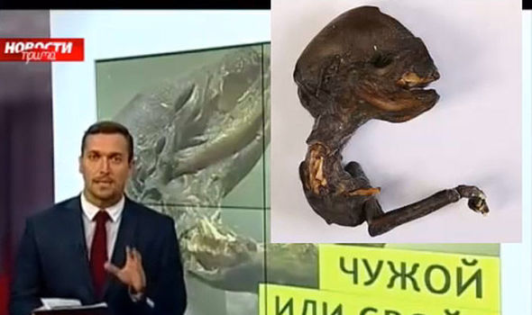 alien corpse russia, alien russia nuclear plant, aline corpse found near russian nuclear plant, alien corpse found in russia, et or chicken mutant, What is this mysterious creature found in Russia? alien creature found in Russia near leningrad nuclear plant