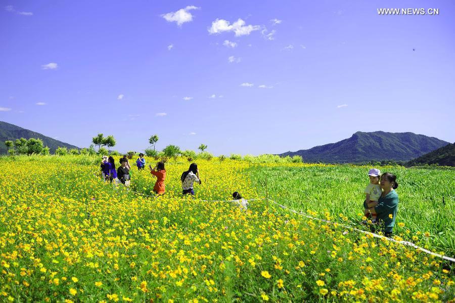 beijing flowers, beijing autumn, beijing gardens, beijing flower pictures, smog beijing, smog pollution beijing, pollution beijing, China pollution: Beijing smog hits hazardous levels