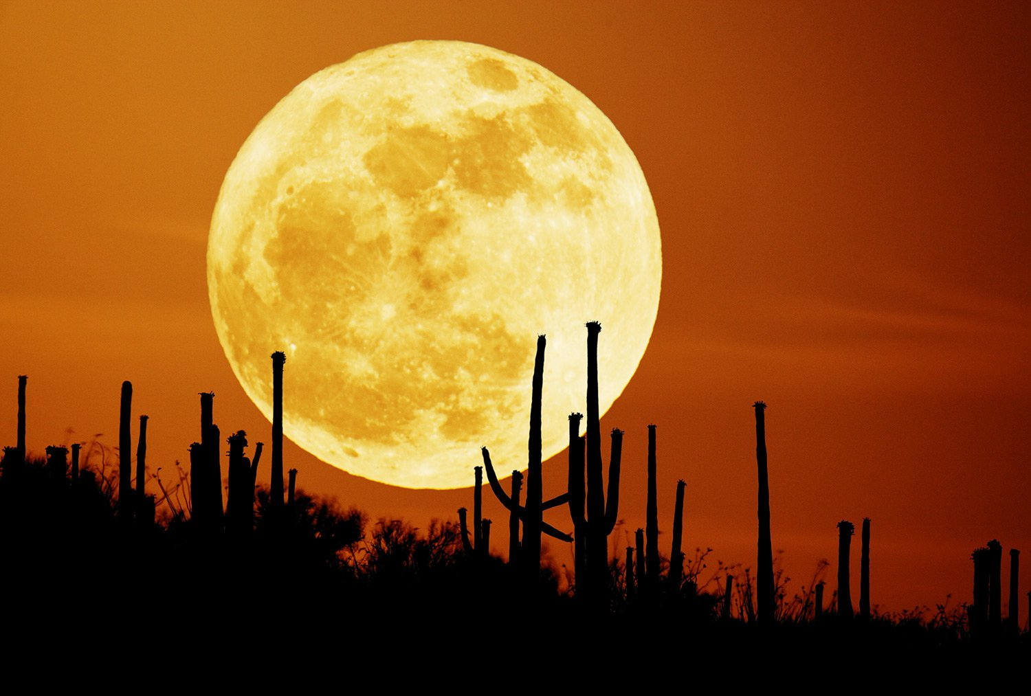 Harvest Moon, Harvest Moon september, Harvest Moon largest moon, what is the largest moon in the year, Harvest Moon largest moon in the year, Harvest Moon lunar eclipse, blood moon, blood moon lunar exclipse september 27 2015