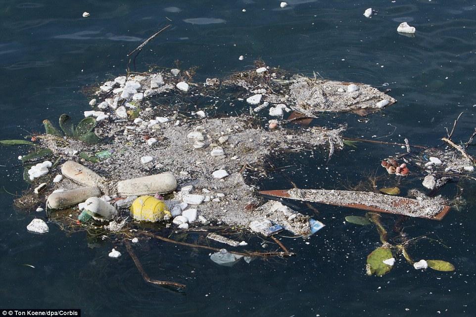 ocean garbage patch, ocean garbage patches, ocean garbage patch video, ocean garbage patches video, Watch the ocean's five islands of garbage form over the last 35 years, garbage islandsocean, ocean garbage islands, 5 ocean garbage islands, Garbage Patch Visualization Experiment, Garbage Patch Visualization