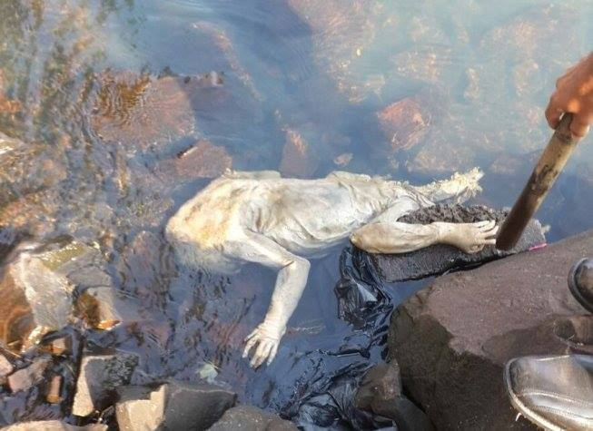 alien mysterious creature paraguay, alien found paraguay waters, mysterious creature found off paraguay coast, alien found in paraguqay, et found in paraguay, paraguay mysterious crature october 2015, pictures of alien creature found in Paraguay, Theis alien creature has been found in Paraguay. What could it be?, Is this the first real discovery of an alien body?