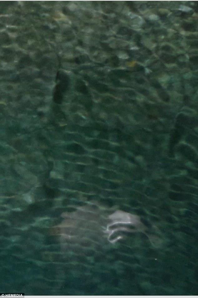mysterious creature corfu, strange creature corfu greece, mystery sea creature corfu beach, cave strange creature corfu, What is this mystery creature pictured in a cave around Corfu in Greece?