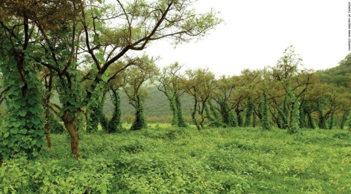 Salalah monsoon, rainforest salalah desert monsoon, ainforest appears in dersertic oman, rainforest emerges in salalah desert, kahreef, khareef salalah monsoon, rainforest appears in dersertic oman, rainforest emerges in salalah desert