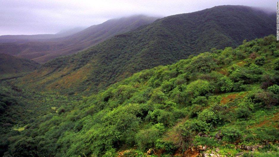 Salalah monsoon, rainforest salalah desert monsoon, ainforest appears in dersertic oman, rainforest emerges in salalah desert, kahreef, khareef salalah monsoon, rainforest appears in dersertic oman, rainforest emerges in salalah desert