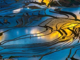 rice field picture, land of the thousand mirrors, the land of the thousand mirrors phenomenon, sun reflection in rice fields, awesome pictures of rice fields, best pictures of rice fiels sunset