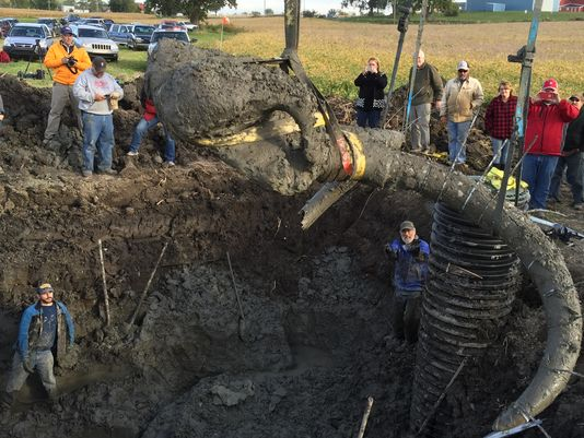 woolly mammoth field chelsea michigan, woolly mammoth field chelsea michigan october 1 2015, discovery of woolly mammoth field chelsea michigan october 2015, skeleton of woolly mammoth found in Michigan, woolly mammoth bones discovered by farmers in michigan photo, woolly mammoth field chelsea michigan pictures, woolly mammoth field chelsea michigan video, woolly mammoth field chelsea michigan photos