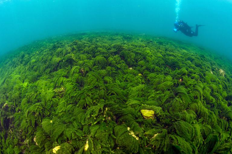 green slime baikal, green slime lake baikal, mysterious green slime lake baikal, lake baikal mysterious green slime, green slime mystery lake baikal, Mystery green slime invades Lake Baikal and worries scientists in the world's deepest lake