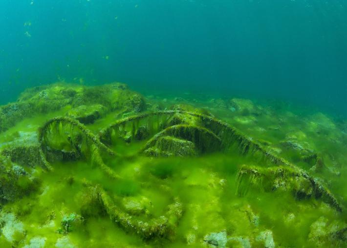 green slime baikal, green slime lake baikal, mysterious green slime lake baikal, lake baikal mysterious green slime, green slime mystery lake baikal, Mystery green slime invades Lake Baikal and worries scientists in the world's deepest lake