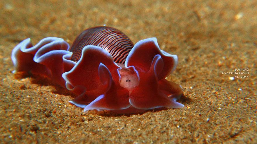 alien on earth, animals that looks like alien, alien sea slug, weird sea slug pictures, alien sea slug, Sea Slugs That Prove Aliens Already Live On Planet Earth, aliens exist on earth, aliens already exist on earth, animals looking like aliens, animal on earth looking like aliens, alien animal