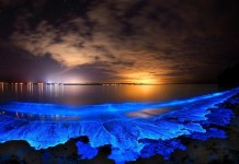 glowing beach, bioluminescent plankton, glowing beach bioluminescent plankton, bioluminescence, bioluminescence phenomenon, glowing beach pictures, glowing beach video, bioluminescence picture, bioluminescence video, Bioluminescent Plankton on the Shores of Hong Kong