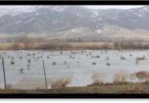 tumbleweeds montana, tumbleweeds montana video, tumbleweeds montana frozen lake, tumbleweeds blown over frozen lake montana video, tumbleweeds montana december 2015 video
