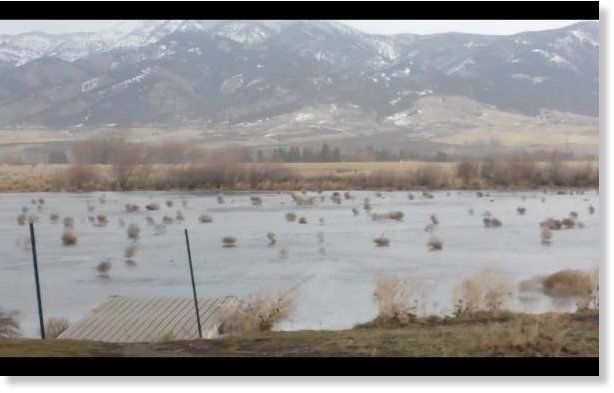 tumbleweeds montana, tumbleweeds montana video, tumbleweeds montana frozen lake, tumbleweeds blown over frozen lake montana video, tumbleweeds montana december 2015 video