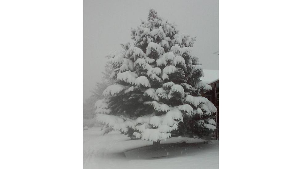 winter storm echo, winter storm echo news, winter storm echo pictures, echo snow storm, snowstorm echo, winter storm echo images, winter storm echo impacts, winter storm echo 2015