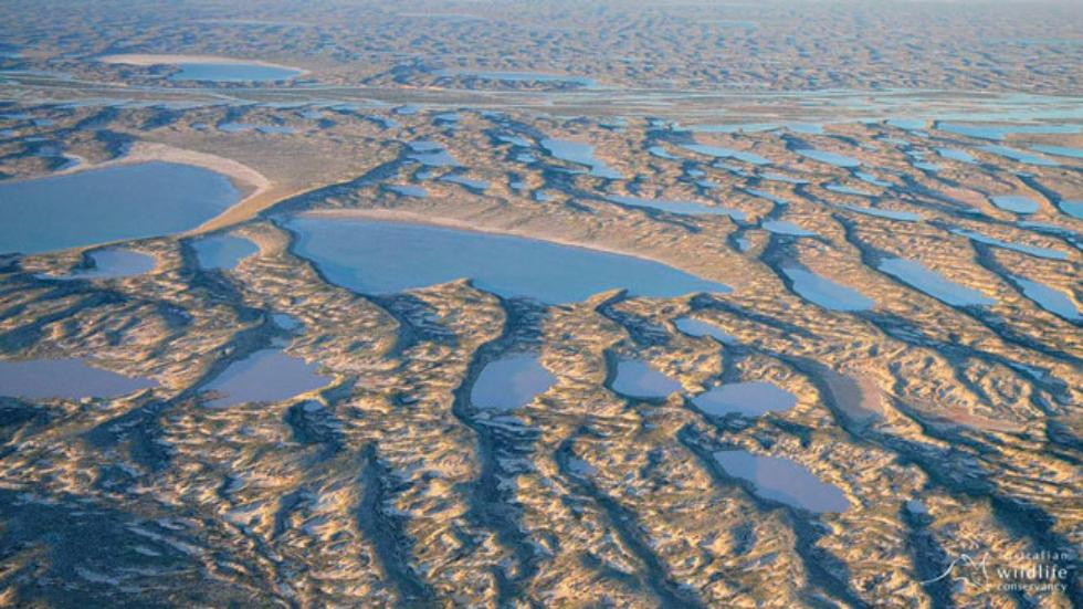 lake eyre australia largest lake fills up, Heavy Rains Fill Australian Desert Lake In Rare Event, Australia Largest Lake Comes Back to Life, lake eyre flooded by heavy rainfall, lake eyre fills up after heavy rains