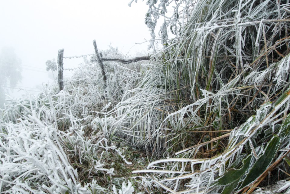 laos snow, freezing cold weather laos, anomalic cold weather in laos, laos cold weather anomaly, freeze in lao, tropical laos snow january 2016