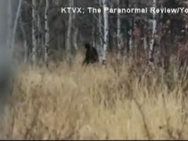 payson canyon utah bigfoot, Intriguing ‪Bigfoot‬ sighting in Utah Payson Canyon, bigfoot Utah Payson Canyon, bigfoot Utah Payson Canyon video, Utah Payson Canyon bigfoot video, Utah Payson Canyon sasquatch video, real bigfoot sighting Utah Payson Canyon, latest bigfoot sightings 2016, bigfoot sightings february 2016