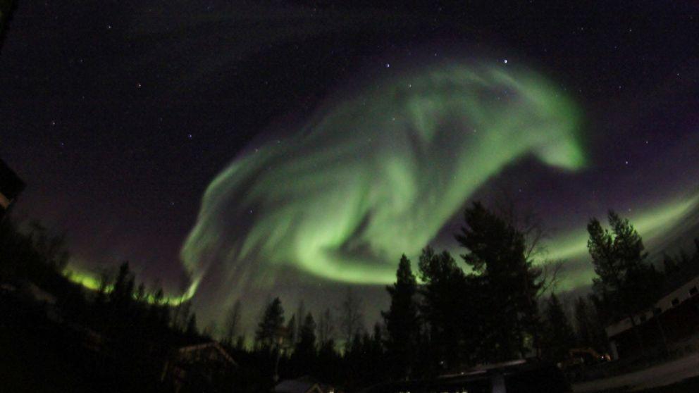 aurora wolf, aurora looking like wolf sweden, aurora wolf sweden, sweden aurora wolf shpe, wolf shaped aurora sweden, aurora shaped in animals, northern lights look like wolf, auroras look like animals picture
