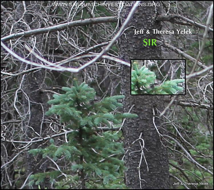bigfoot colorado, bigfoot colorado photo, bigfoot colorado picture, bigfoot sighting colorado rockies, bigfoot colorado pictures february 2016, bigfoot colorado sighting