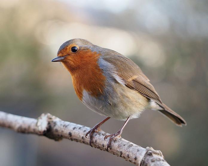 bird revives bird, Bird revives another bird Video, bird revived back to LIFE by another bird video