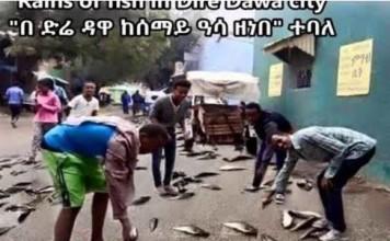 fish rain ethiopia, rain of fish ethiopia, Rains of fish in Dire Dawa city Ethiopia, Rains of fish in Dire Dawa video, Rains of fish in Dire Dawa photo