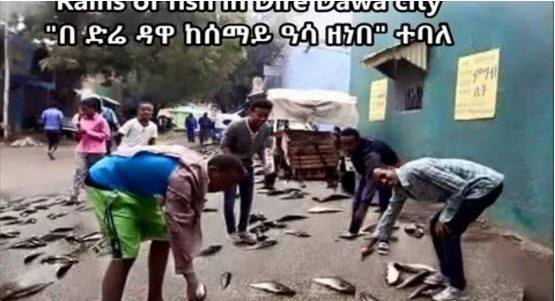 fish rain ethiopia, rain of fish ethiopia, Rains of fish in Dire Dawa city Ethiopia, Rains of fish in Dire Dawa video, Rains of fish in Dire Dawa photo