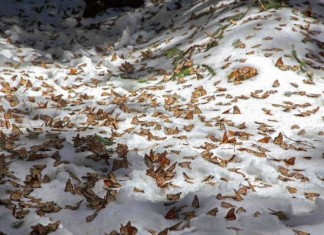 """monarch butterflies die in Mexico, millions of monarch butterflies die in Mexico, monarch butterflies freeze in Mexico, monarch butterfly die in mass in mexico, monarch butterfly mass die off march 2016, 1.5 millions of monarch butterflies die in Mexico, 1.5 millones de Mariposas monarca mueren congeladas. 13 de Marzo 2016, millones de mariposas monarca mueren, SE CONGELAN LAS MARIPOSAS MONARCAS Y MUEREN MÁS DE 1.5 MILLONES, Mueren millones de """"Monarcas"""" en santuario de Michocán, Nevadas acaban con 1.5 millones de mariposas monarcas"""