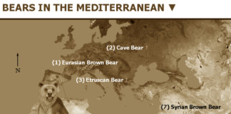 atlas bear video march 2016, atlas bear video march 2016, atlas bear filmed in Algeria march 2016, atlas bear not extinct, atlas bear filmed in algeria march 2016
