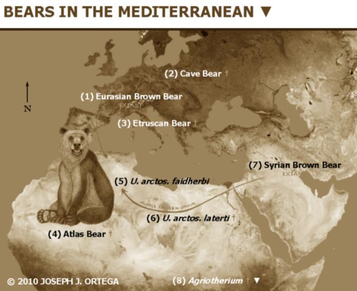 atlas bear video march 2016, atlas bear video march 2016, atlas bear filmed in Algeria march 2016, atlas bear not extinct, atlas bear filmed in algeria march 2016