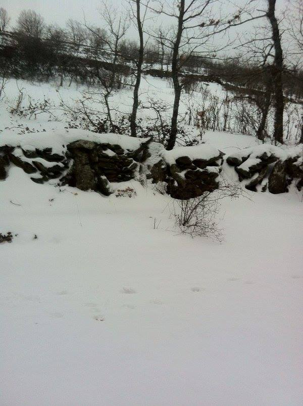 jalisco snow, guadalaraja snow, jalisco snow march 2016, jalisco snow march 9 2016 pictures, jalisco snow march 2016 pictures, snow storm mexico, anomalous snow mexico, mexico snow storm pictures, jalisco snow storm march 2016 photo