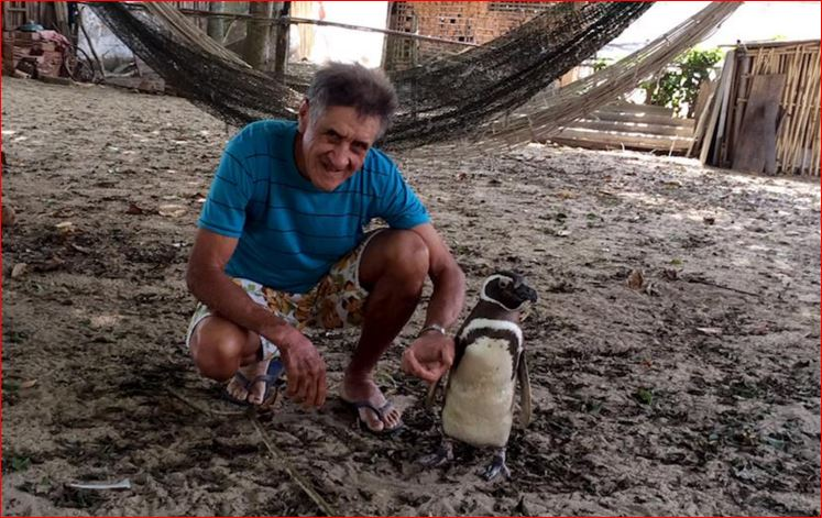 jinjing, jinjing penguin, jinjing penguin video, jinjing penguin documentary, jinjing penguin film, jinjing penguin story, Patagonian Penguin Finds Second Home in Brazil, A Magellanic penguin that migrates from Patagonia and a retired bricklayer in a Brazilian fishing village have struck up an unusual friendship