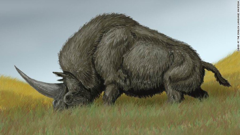 real unicorn fossil, real siberian unicorn, real siberian unicorn fossil, real siberian unicorn find, real siberian unicorn roamed earth 30000 years ago