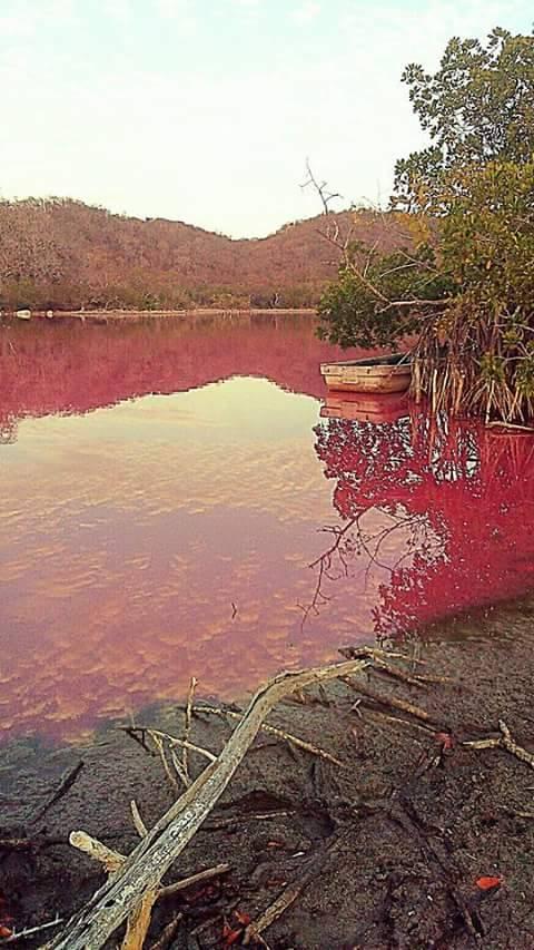 red lagoon mexico, red lagoon huatalco mexico, red lagoon oaxaca mexico, Se presenta fenómeno extraño en laguna de Huatulco, Agroquìmicos y falta de lluvia tiñen de rojo laguna de Huatulco,
