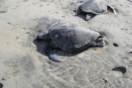 Tortugas muertas mexico