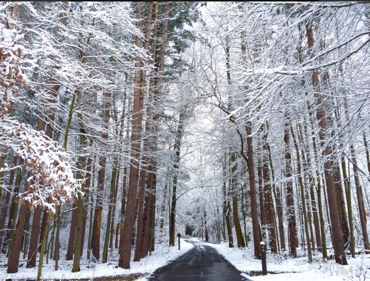 snow ohio, april snow ohio, snow ohio april, snow ohio april pictures, snow ohio april video