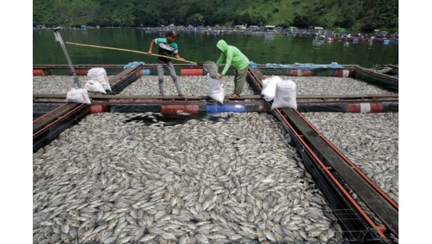 lake toba mass die-off, lake toba fish mass die-off, lake toba eruption, volcanic unrest lake toba, mysterious fish kill lake toba, mysterious mass die-off lake toba, lake toba supervolcano eruption