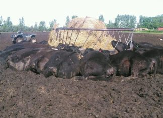 lightning kills 21 head of cattle south dakota, 21 head of cattle killed by lightning, lightning kills entire heard of cattle, 21 cattle killed by lightning in south dakota, cattle killed by lightning south dakota, herd of cattle killes by lightning bolt