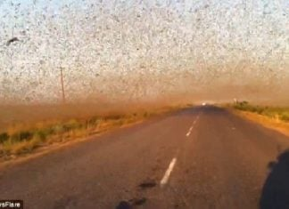 millions locusts swarm russia, millions locusts swarm russia may 2016, millions locusts swarm russia video, biblical locust invasion russia, apocalyptical locust invasion dagestan may 30 2016 video, locust invasion russia video