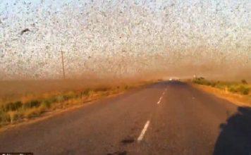 millions locusts swarm russia, millions locusts swarm russia may 2016, millions locusts swarm russia video, biblical locust invasion russia, apocalyptical locust invasion dagestan may 30 2016 video, locust invasion russia video