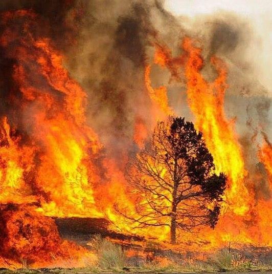 Yarnell arizona wildfire, yarnell fire, arizona wildfire, yarnell wildfire june 2016, yarnell wildfire june 2016 pictures, arizona wildfire june 2016 video, Yarnell arizona wildfire june 2016 photo, Yarnell arizona wildfire june 2016 video, Yarnell arizona wildfire video and photo