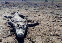 Río Pilcomayo, drying Río Pilcomayo paraguay drought, paraguay drought, river pilcomayo drought, thousands of fish and crocodiles die in disappearing river pilcomayo in paraguay, river pilcomayo disappearance paraguay, Sequía mortal: peces y yacarés mueren por la bajante del Río Pilcomayo, Río Pilcomayo: Cocodrilos y peces mueren por sequía, Sequía mortal: peces y yacarés mueren por la bajante del río Pilcomayo, desatre ecologico rio Pilcomayo